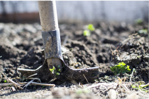 7 Essential Gardening Tools Blog.