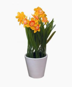 Artificial Plant - Daffodil