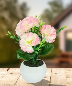 Carnation in Ceramic Pot