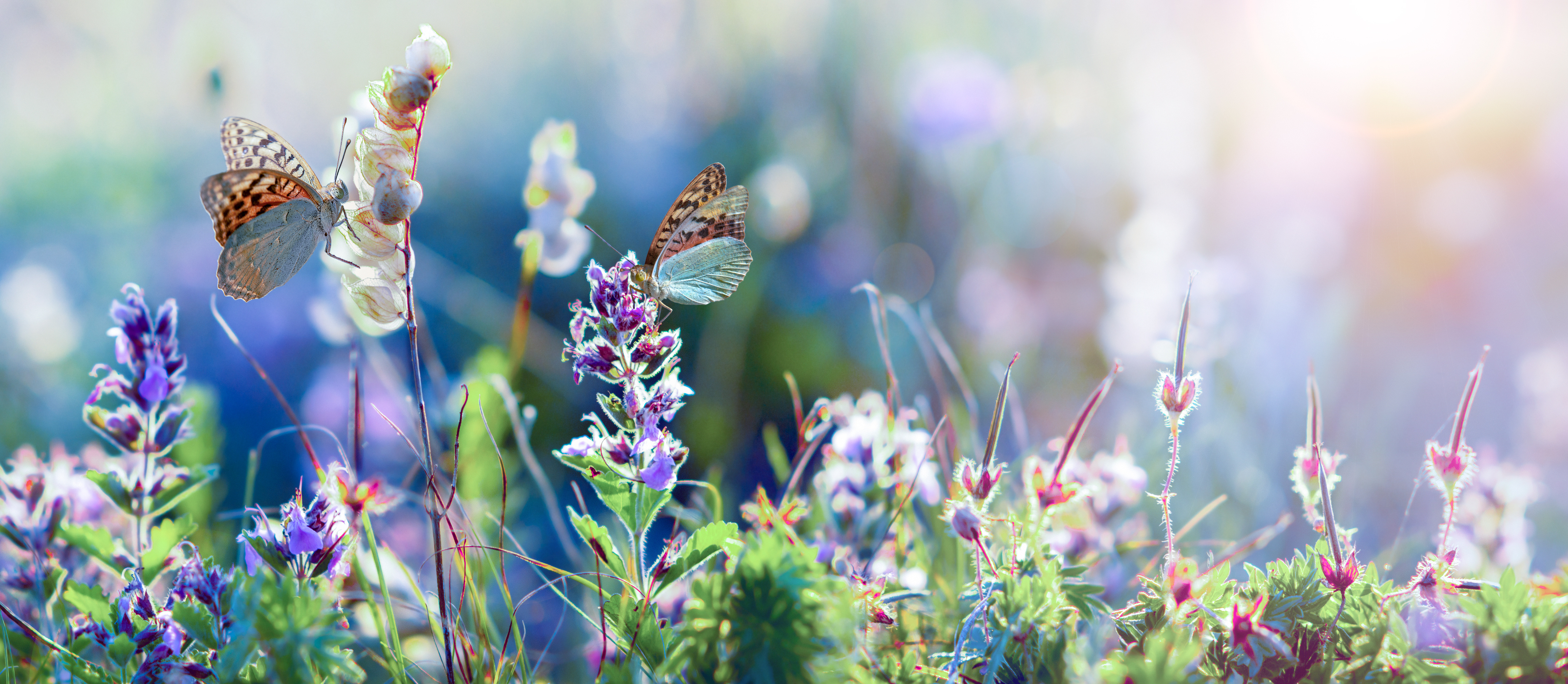 A wildflower meadow with butterflies.