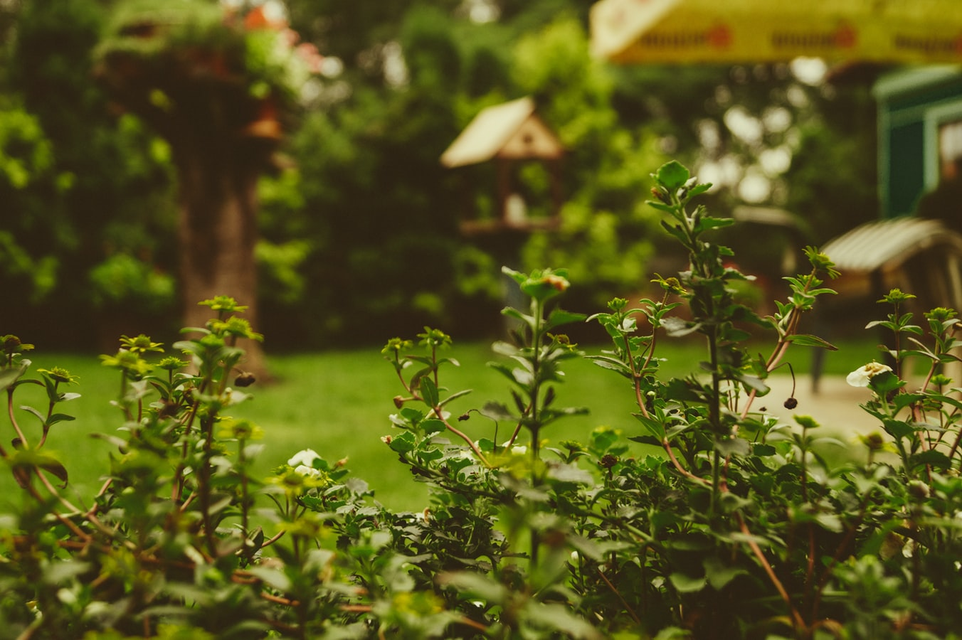 How to Care For Your Garden In Winter Blog
